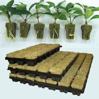 hydroponics rockwool کشت بدون خاک با پشم سنگ